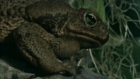 frogs03